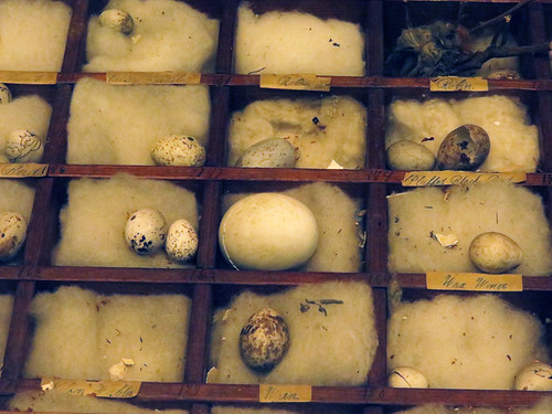 Eggs in boxes, part of the collection of the Beaty Biodiversity Museum at UBC, Vancouver