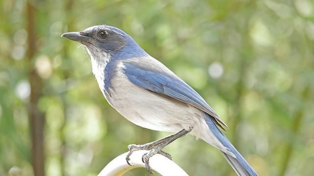 Bluebird is not amused