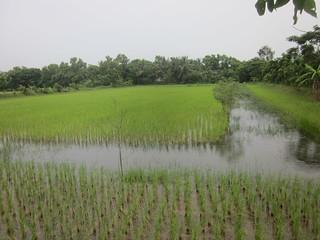Trench Model IRFC unit (Source: RCDC, Odisha)