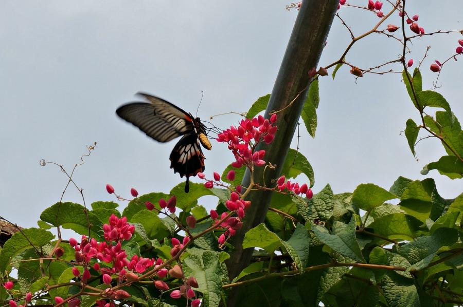 Mau Chau Ecolodge - Butterflies