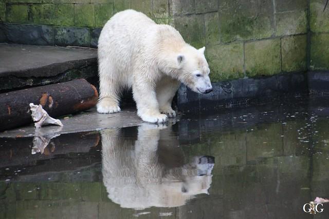 Besuch Zoo Rostock 29.12.201523