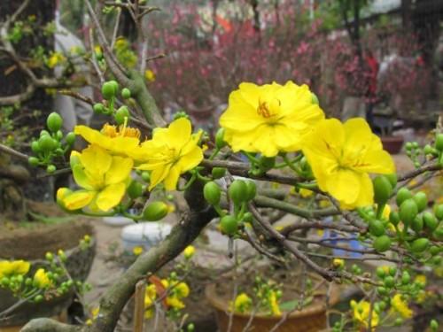Những loại hoa nên dâng lên bàn thờ đầu xuân để năm mới rước tài lộc vào nhà