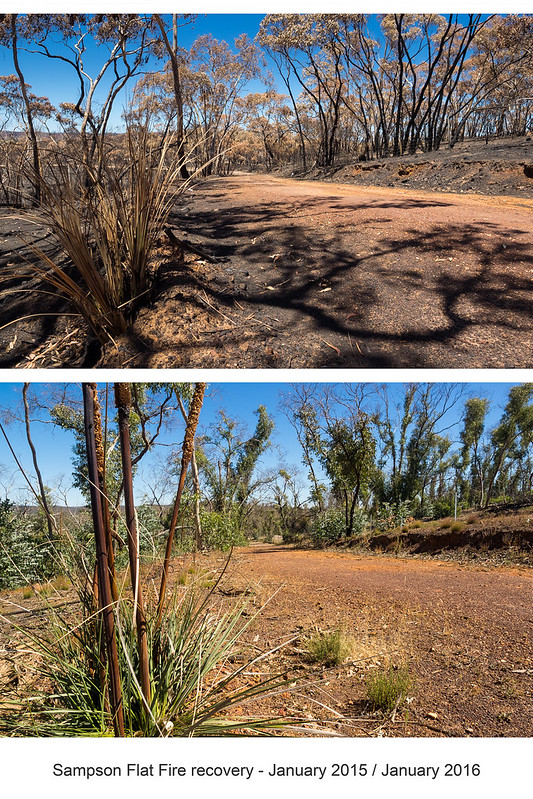 sampson flat bushfire: tracking the recovery
