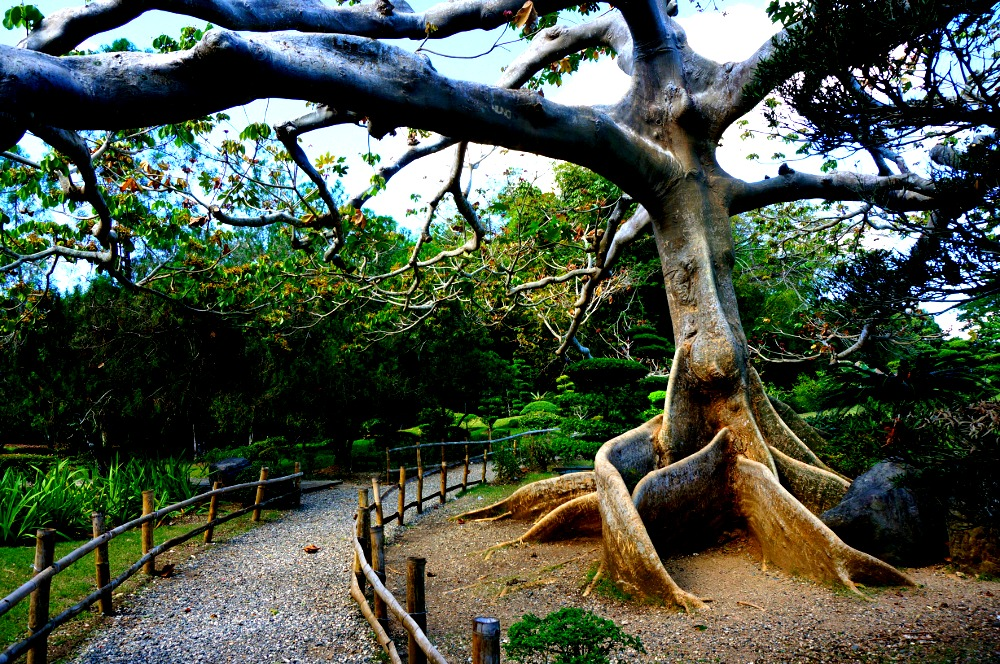 Tree in Japanese Garden