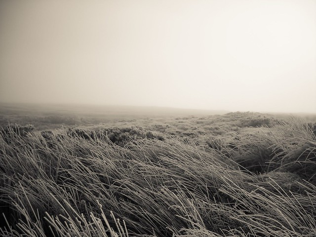 A Sea of Frozen, Nikon COOLPIX S510