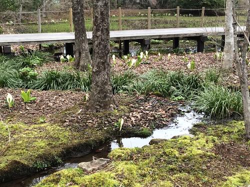 箱根、仙石原湿生花園を散策 - naniyuutorimannen - 您说什么!