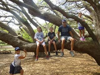 Cool climbing tree