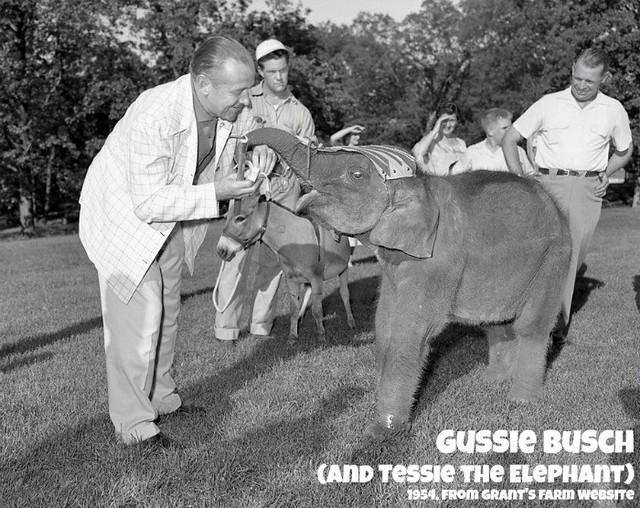 gussie-elephant