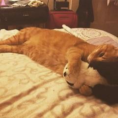 """I love you Panda"" #keithspam #catspam"