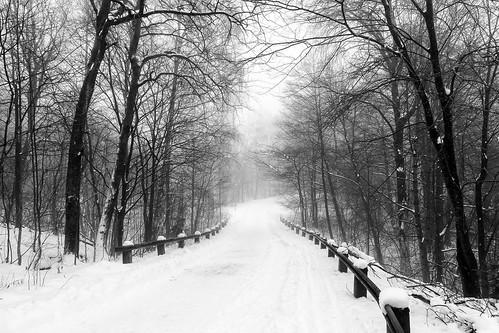 trees winter white mist snow black sweden gothenburg kviberg canonef24105mmf4lisusm västragötalandslän canoneos6d