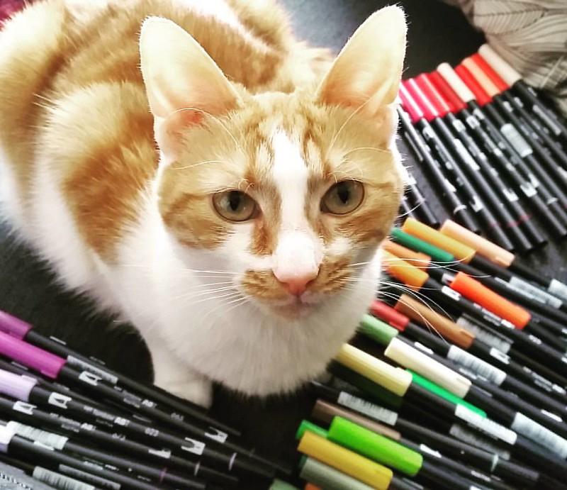 My cute little helper 😻 #meeshathecat #meesha #colorcoordination #tombowmarkers #tombow #tombowusa #tombowbrushpen #craftyendeavors #craftmaterials #craftygirl