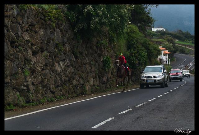Tenerife Parque Nacional Teide Valle la Orotava - Caballo en el valle de la Orotava