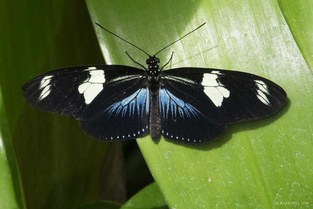 Butterfly 2016-31