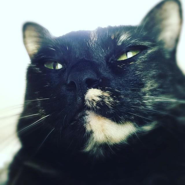 #cat #猫 #ねこ むむっ☹️☹️☹️