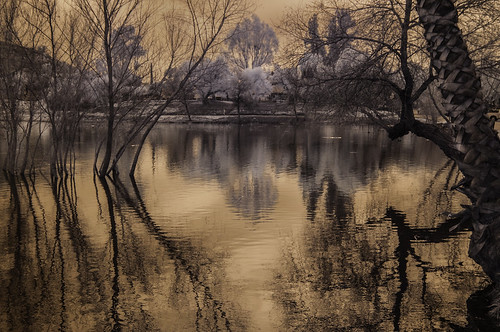 trees sky nature water reflections ir highcontrast surreal lakeside infrared lindolake convertedinfraredcamera