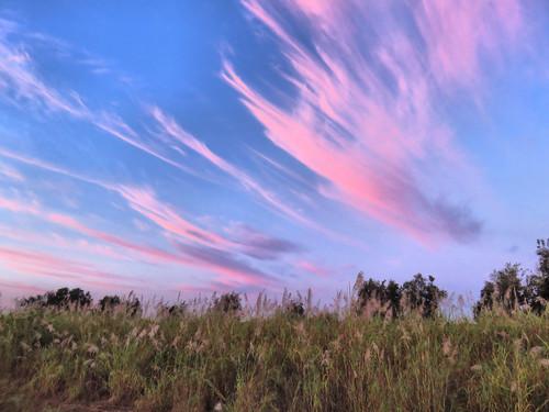 Wispy pink clouds HDR 20160204