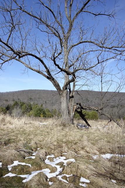 DSC00983-Tree
