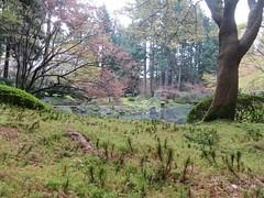 Mini moss forest at Nitobe Memorial Garden