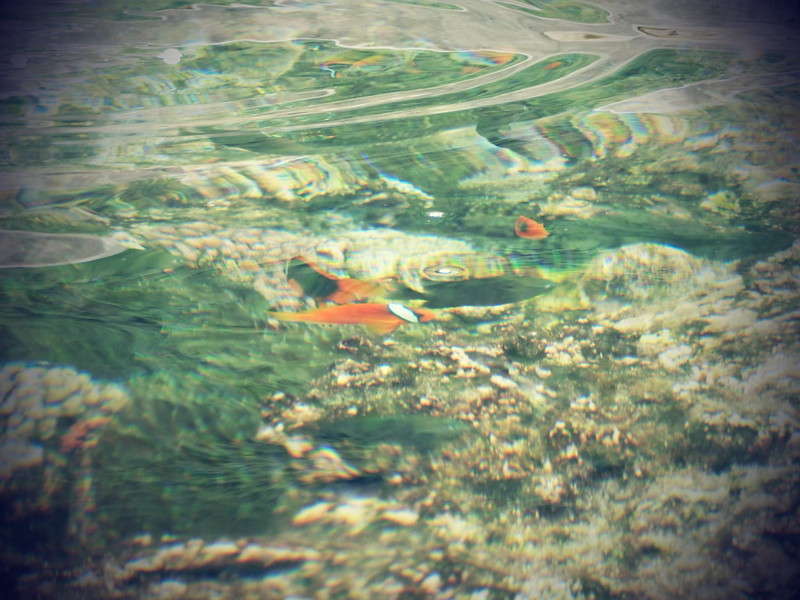 蘭嶼浮潛-環島景點-17度c隨拍 (29)