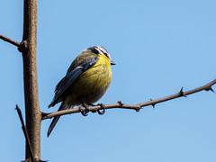 2016 Bois de Bâtie, oiseaux