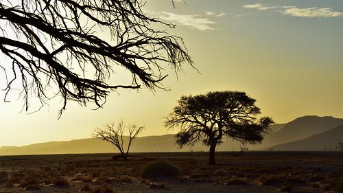 tree twilight dunes namibia naukluft