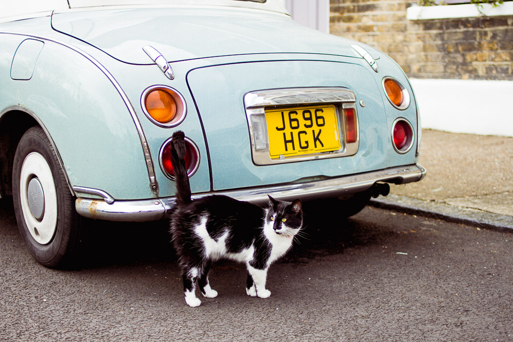 black and white cat by a fiat 500 car