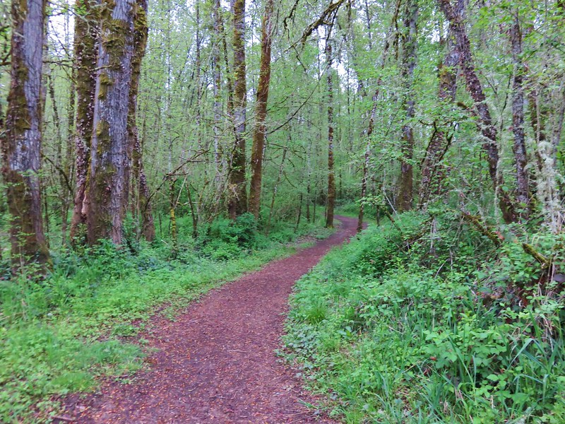 Trail in Minto-Brown Island Park