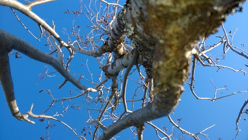 pihlaja porosaari kuusamojärvi liemusaari läskipyöräily