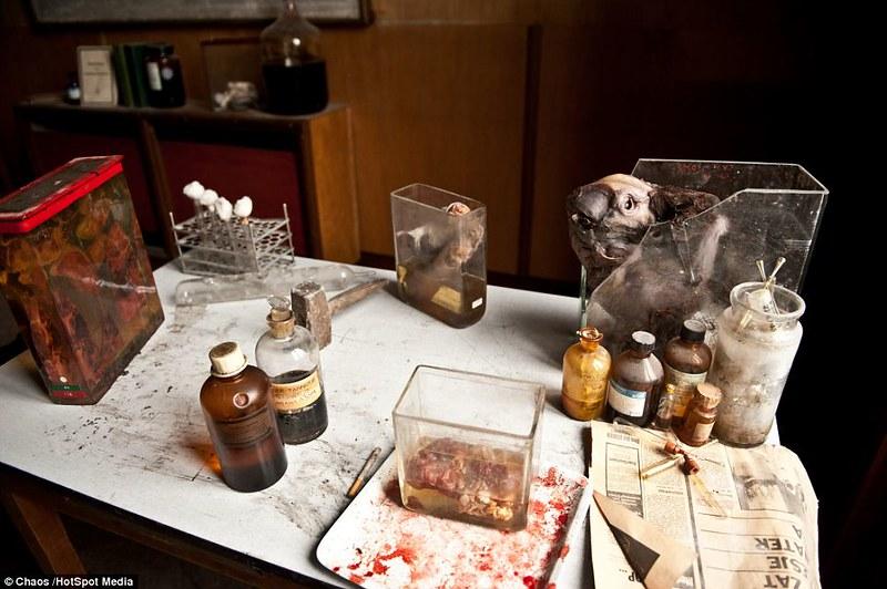 驚魂比利時「廢棄獸醫學院」福馬林的怪誕美學24