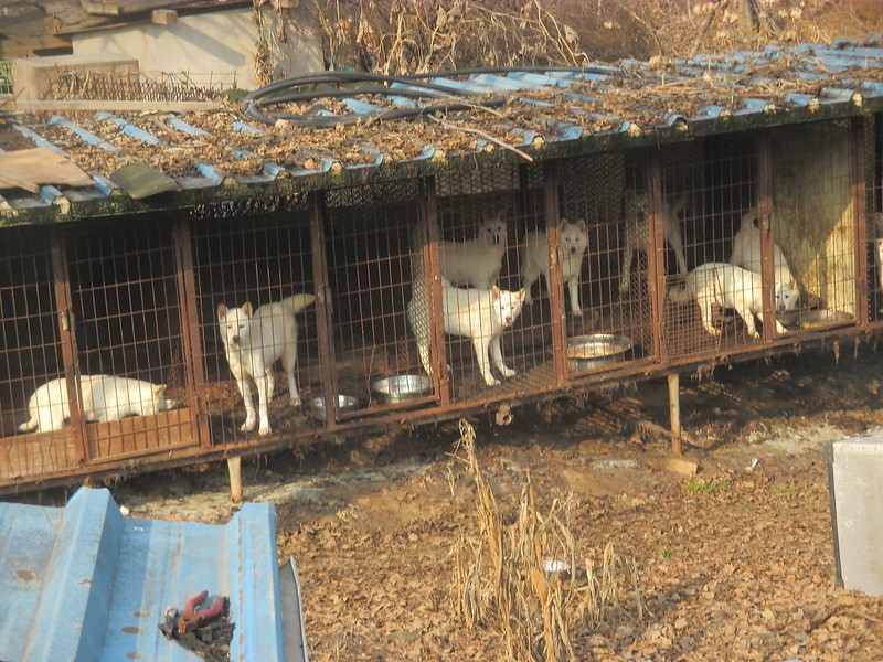 Victory!  Incheon Munhank dog farm #4 forced to pay fine and closing down