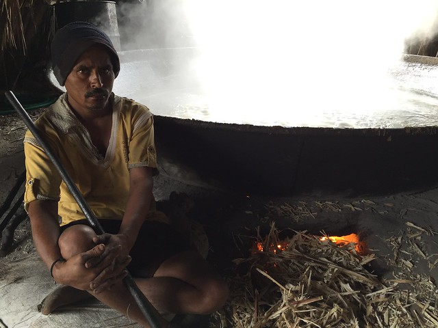 Boiling sugar canes