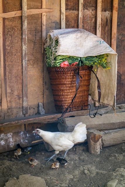 Hmong village near Luang Prabang, Laos ルアンパバーン郊外のモン族村