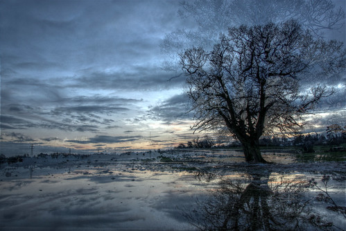Hallow Tree in flood water