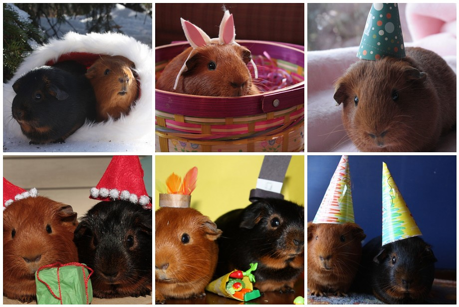 Nibbles in Hats