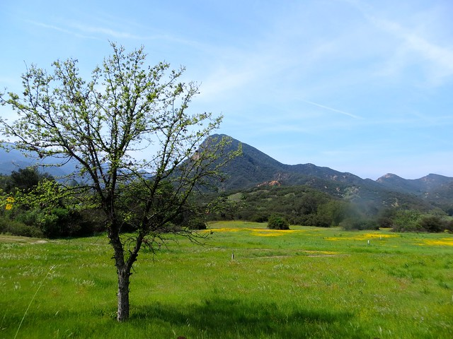 spring in the santa monica mtns