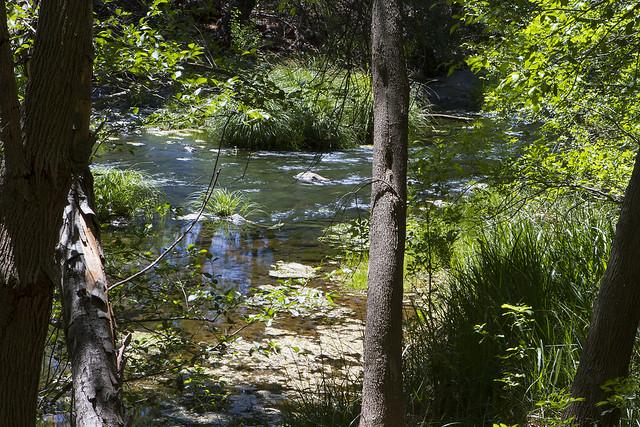 Montezuma Well-  37_7d1__240416