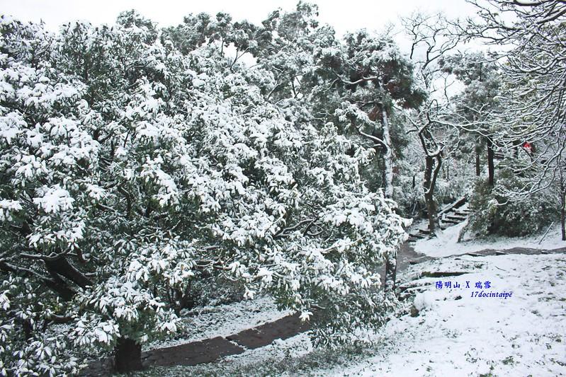 2016-台北陽明山-瑞雪-難得一見的雪白山景-17度C隨拍 (89)