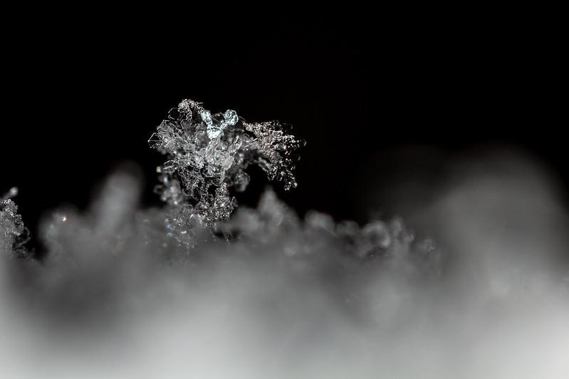 Snowflakes IV