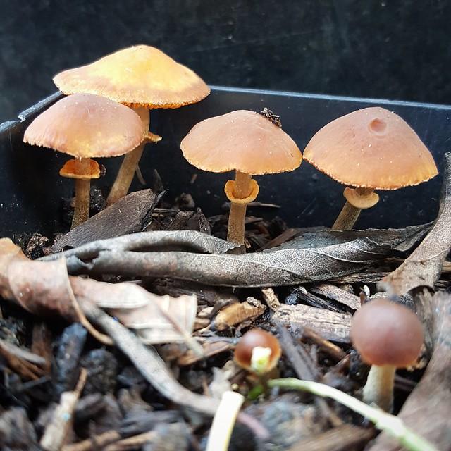 Mushroom Mushroom Mushroom...