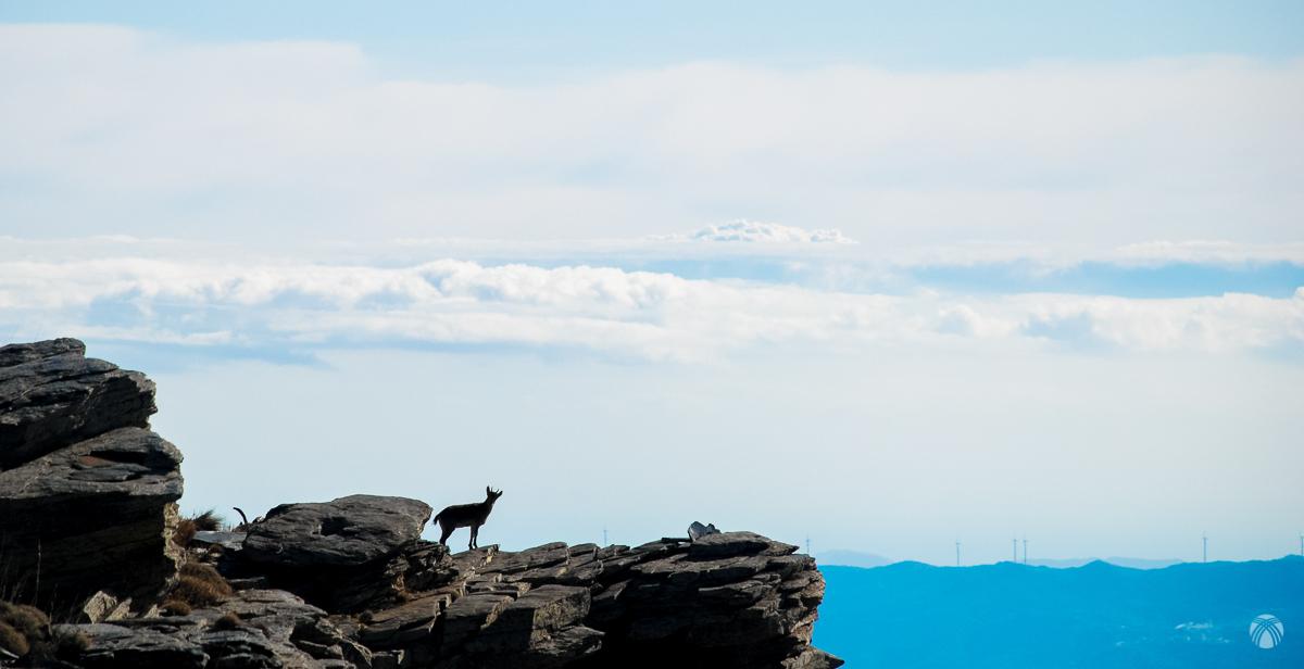 Cabras y nubes sobre el Mediterráneo