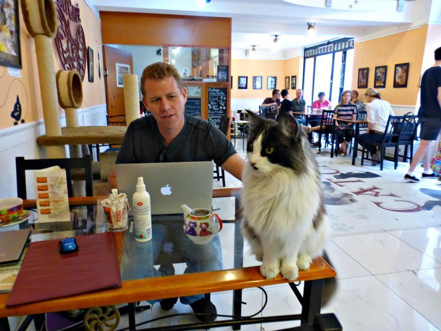 Budapest Cat Cafe