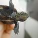 "My Friend ""π"", a turtle:""π"" 是我朋友 by love_child_kyoto"