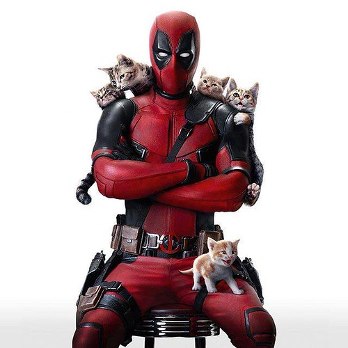 deadpool-caturday-168597