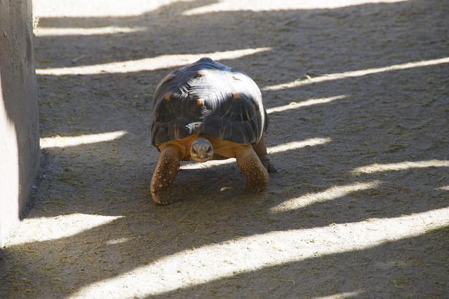 san diego zoo-92