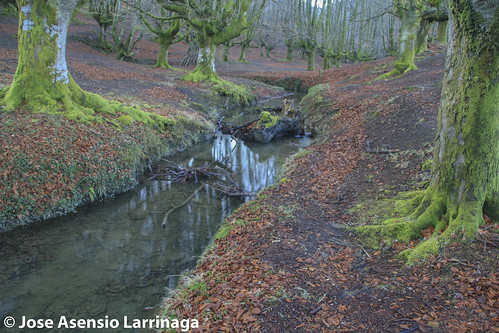 Parque Natural de Gorbeia  #DePaseoConLarri #Flickr -3042