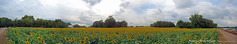 180° Pano at Grinter Farms, 8 Sept 2015
