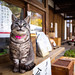 at the front counter (Umenomiya shrine, Kyoto) by Marser