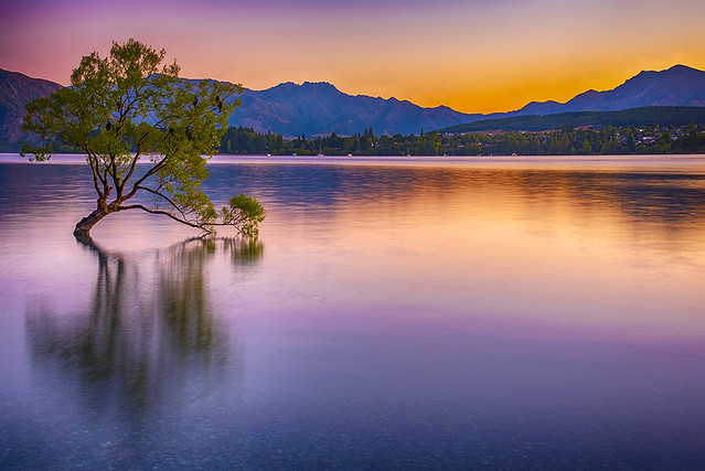 That Wanaka Tree, Morning Blue Hour