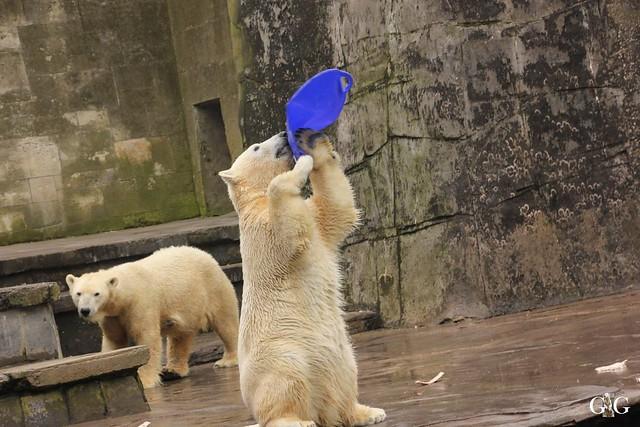 Besuch Zoo Rostock 12.03.2016103