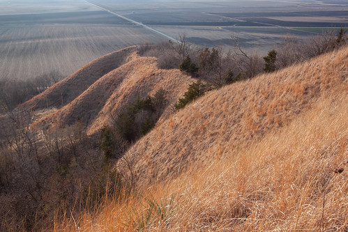 park state iowa hills valley ia yucca glauca loess waubonsie yuccaglauca